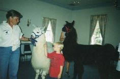 Llamas in the library: a children's program!