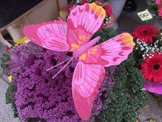 Tämä pinkki perhonen istahti Tallinnan kukkakujalla myynnissä olleelle syyskimpulle. #tallinna #eckeröline #kukkakuja
