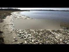 Người dân và cá chết, Ông Trọng chọn Formosa