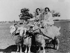 Goat-carting was all the rage in 1900s Australia