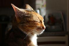My #cat Skyler
