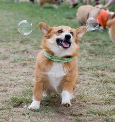 Yayyyyy bubbles.  Photographed by Jeff Dillon [website | flickr]