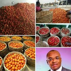 AGRO-ALLIED -ECONOMY: UDOMS VEGETABLES REVOLUTION   Emmanuel Nicholas When Akwa Ibom Enterprise and Employment Scheme (AKEES) was launched many saw it as another deceptive initiative by government to hoodwink the innocent public many who also believe in the scheme thought it was all about white collar job .  But as a banana peel covering the sweetness of the banana the AKEES initiatives has started yielding fruits in disparate echelons of the State economy from Agriculture cottage industries…