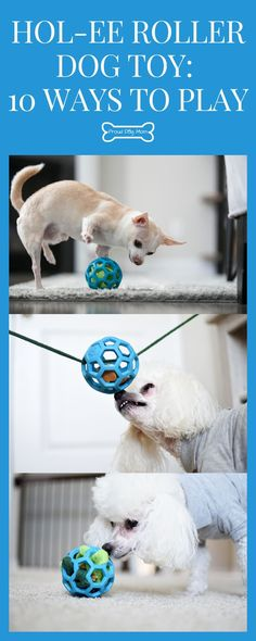 We just got a cool new dog toy that I can't wait to share with you! It's called a Hol-EE Roller and it's a flexible rubber ball that features lots of holes. Homemade Dog Toys, Diy Dog Toys, Best Dog Toys, Diy Enrichment Toys For Dogs, Dog Activities, Dog Playground, Dog Puzzles, Interactive Dog Toys, Dog Games