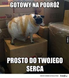 Funny The Pugage Has Arrived 2014 meme and lol. enjoy the best dog pictures and funny dog pics 2014 from here Funny Animal Pictures, Funny Animals, Cute Animals, Random Pictures, Dog Mems, Cute Pugs, Anaconda, Pug Love, Man Humor