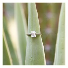 Take a look at this beauty!  An emerald cut diamond was the way to Courtney's heart when John proposed. Placing it in nature made it stand out even more!  I was so flattered when Courtney reached out to me to capture her engagement photos while visiting family in Palm Springs. Her and John were visiting from Dallas, Texas! ‪ #‎engagement ‪#‎weddingring‬  ‪#‎weddingwednesday‬ ‪#‎engagementring‬ ‪#‎engagementsession‬ ‪#‎laquinta‬ ‪#‎dallas‬ ‪#‎laquintaresort‬