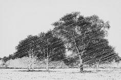 Nieuw in mijn Werk aan de Muur shop: Park bomen