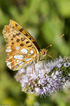 Mariposa by jose maria luis marquez on 500px