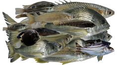 Saltmarsh is an important habitat for fish. Including the juveniles of a number of commercially important fish. Habitats, Number, Fish, Ichthys