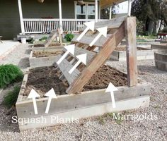 Squash Growing Racks Made From Pallets with marigolds planted under to deter pests