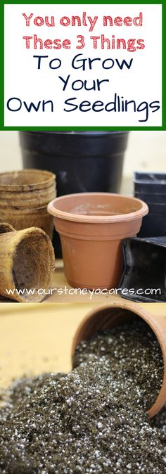 Starting Seedlings – The basics of Starting Seedlings – 3 things you need. The basics of starting seedlings are pretty easy to grasp. Really all you need is a container, some soil and a light! Source by attainsustain