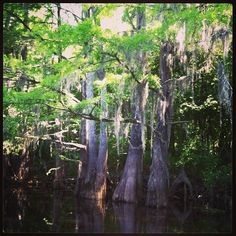 Spanish Moss draped from the trees on a river cruise while visiting Myrtle Beach.