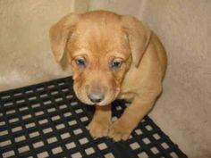 San Antonio Humane Society Adoptable Dogs