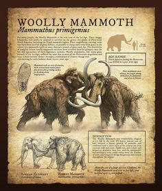Design and Illustration for Pleistocene (Ice Age) specimens and fossils, natural history museum signage. Prehistoric World, Prehistoric Creatures, Mythical Creatures, Dinosaur Art, Dinosaur Fossils, Dinosaur Crafts, Extinct Animals, History Museum, Natural History