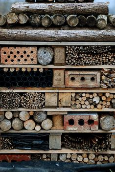 Stuff arranged to attract bees & insect army - at the Rodley nature reserve in England. {what extraordinary textures}!
