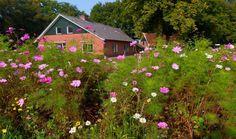 Natuurhuisje 29724 - vakantiehuis in Geesteren (O)