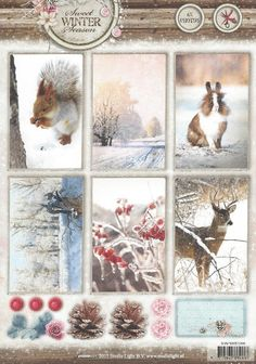 Stansvel Sweet winter | Squirrel