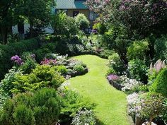small back garden with deep borders, wavy curvy border lines, grass lawn, ferns, perennials, foxgloves, flowers