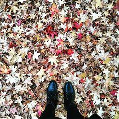 Outono 🍃🍁 #autumn l