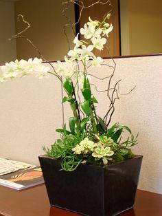 Paixão por orquídeas - Meu orquidário: Decoração com orquídeas