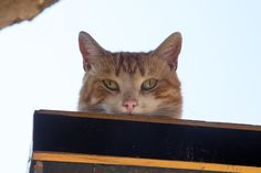 """Istanbul is sometimes called """"The City of Cats"""". Here, street cats are everywhere! Read more.."""