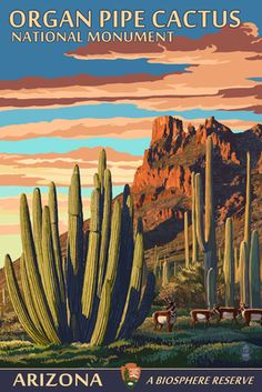 Organ Pipe Cactus National Monument, Arizona - Lantern Press Poster