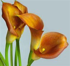 Calla Lily Autumn Jewel