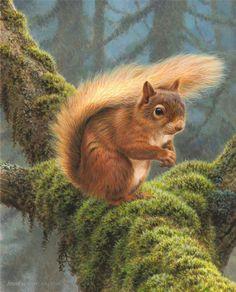 Squirrel - mossy tree