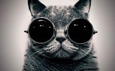 Google Image Result for http://gigafytes.com/wp-content/uploads/2012/02/cool-cat-black-and-white-sunglasses-e1328795652733.jpg