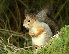 The attentive squirrel takes care of yard,,,,that all is ok. Nature Photos, Squirrel, Yard, Animals, Squirrels, Patio, Animales, Animaux, Yards