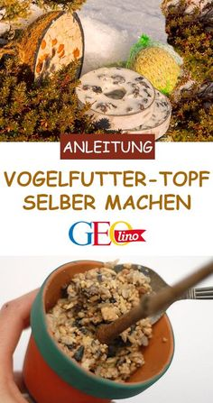 Vogelfutter selber machen: Anleitung und Rezept We will show you how to build a bird feeding bowl in this GEOlino instruction manual! Meal Worms, Large Flower Pots, Hanging Bird Feeders, Cat Supplies, Pet Health, Diy Crafts For Kids, Holiday Recipes, Birds, How To Make