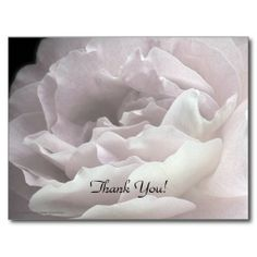 Thank You Postcard, Pale Pink Rose - A photograph of ultra pale pink rose petals on a black background decorate this classy Thank You postcard. The reverse has black lettering on a pale pink background. You can easily change the text or delete (blank out) optional text. Matching postage stamp is zazzle product 172287727244333460. Use this for birthday, anniversary, wedding ...Original photograph by Alan and Marcia Socolik. All Rights Reserved © 2014 Alan & Marcia Socolik. #ThankYou…