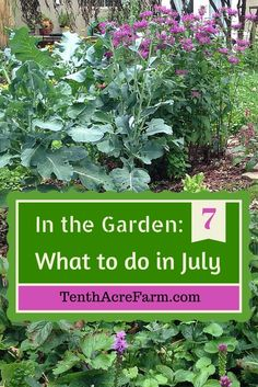 We're halfway through the garden season! Here are some ideas for prioritizing what to do in the edible garden in July.