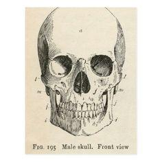 Vintage Skull Diagram Postcard