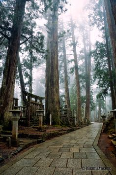 Okunoin Temple Mount Koya  Wakayama Japan Amazing discounts - up to 80% off Compare prices on 100's of Travel booking sites at once Multicityworldtravel.com