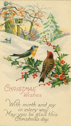 150 best christmas birds images on pinterest christmas bird xmas winter scene with birdhouse 3 birds holly christmas wishes and greeting public domain m4hsunfo
