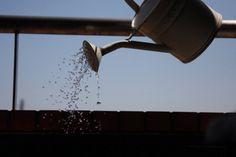 Truque para irrigar com água rica em nutrientes