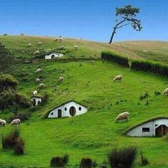 New Zealand, Hobbit Village