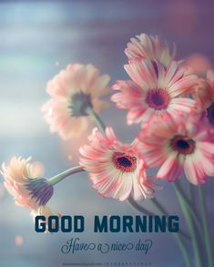 Good Morning Images Flowers, Good Morning Picture, Morning Pictures, G Morning, Morning Quotes, Good Morning Greetings, New Week, Beautiful Landscapes, Good Day