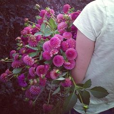armloads of #AmericanGrown Koko puff #dahlias to play with today at #lynnvalestudios, www.LynnVale.com