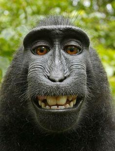 canon, funny animals, monkeys, self portraits, funni, shutter, smile, black, cameras