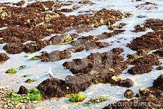 rock-pools-covered-seaweed-low-tide