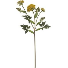 Goldenrod Stem ($3.95) ❤ liked on Polyvore featuring home, home decor, floral decor, flowers, fillers, nature, plants, decorating, flower home decor and crate and barrel
