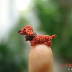 Tiny dachshund