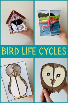 Bird Life Cycle, Life Cycle Craft, Science Projects For Kids, Science For Kids, Science Books, Stem Projects, School Age Activities, Toddler Learning Activities, Diy For Kids