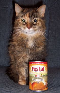 Pumpkin: A Natural Remedy for Constipation and Diarrhea in Cats and Dogs - Yahoo! Voices - voices.yahoo.com