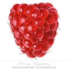 Raspberry, realistic watercolor fruit painting by Anna Mason Art Fruits Drawing, Food Drawing, Botanical Drawings, Botanical Prints, Photo Fruit, Anna Mason, Afrique Art, Gcse Art Sketchbook, Illustration Botanique