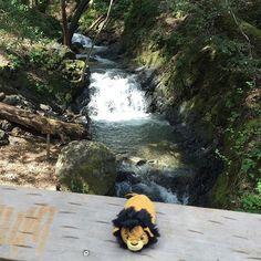 In the jungle  #scar #thelionking #disney #tsumtsum #disneytsumtsum #tsum #disneygram #instadisney #tsumtsumaddict  #ツムツム #tsumtsumtuesday #tsumtsumcollection #disneyland #disneyworld #disneystore #disneyplush #disneytsumtsums #tsumtsums #japanplushies  #disneyfan #disneyaddict #tsumtsum公仔  #disneypark #disneyparks #disneyig #disneygrammers Disney Tsum Tsum, Disney Plush, Tsum Tsums, Disney Addict, Disney Parks, Disneyland, Japan, Instagram Posts, Travel