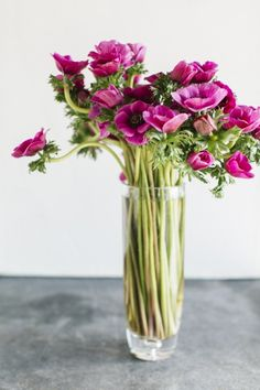 Bouquet of Anemone Deco Floral, Arte Floral, Ikebana, Bloom, Fresh Flowers, Beautiful Flowers, Flowers Nature, Exotic Flowers, Purple Flowers