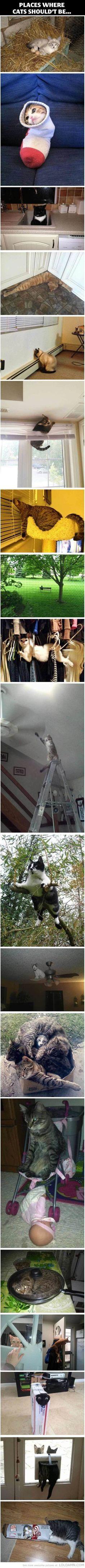 Lieux où les chats ne devraient pas être